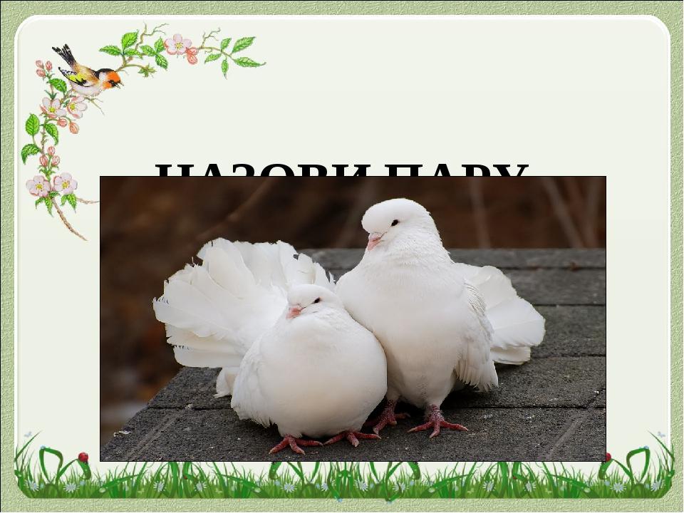 НАЗОВИ ПАРУ голубка голубь