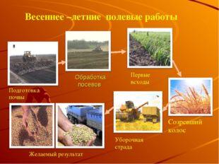 Обработка посевов Подготовка почвы Первые всходы Созревший колос Уборочная ст