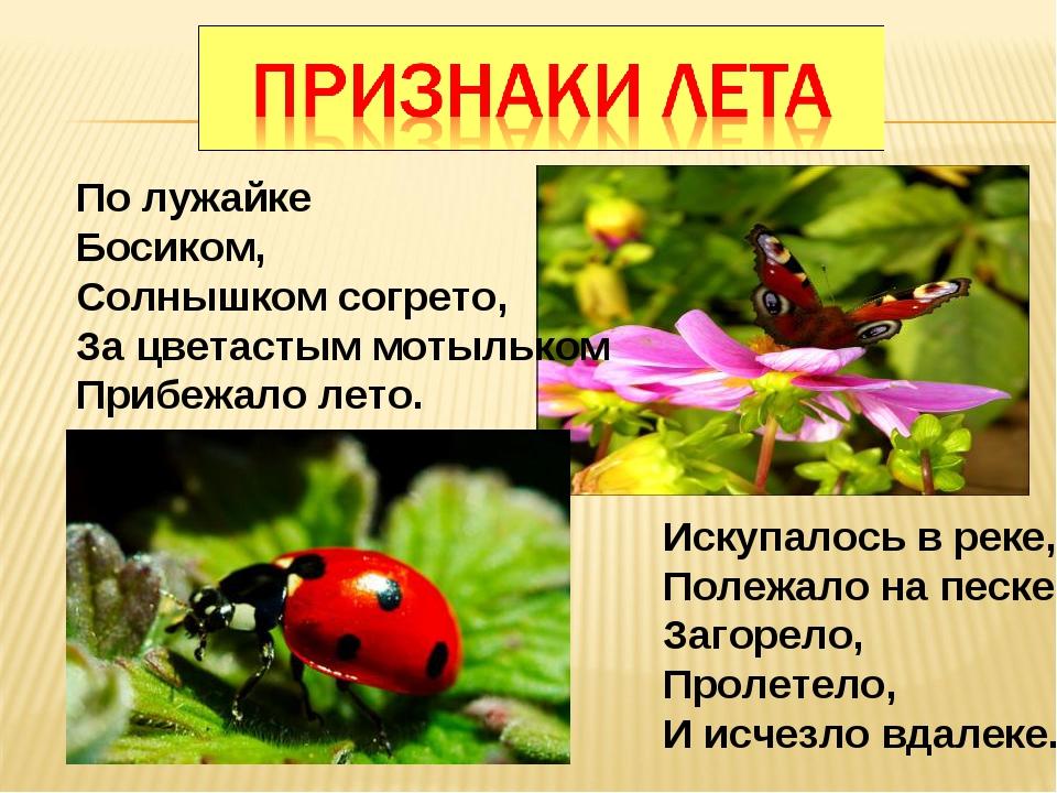 По лужайке Босиком, Солнышком согрето, За цветастым мотыльком Прибежало лето....