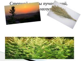 Степной травы пучок сухой, Он и сухой благоухает!