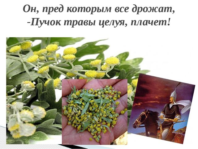 Он, пред которым все дрожат, -Пучок травы целуя, плачет!