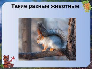 Такие разные животные.
