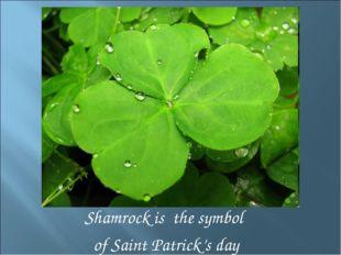 Shamrock is the symbol of Saint Patrick's day