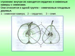 Плоды яблони и груши имеют сходство во внутреннем строении: внутри их находят
