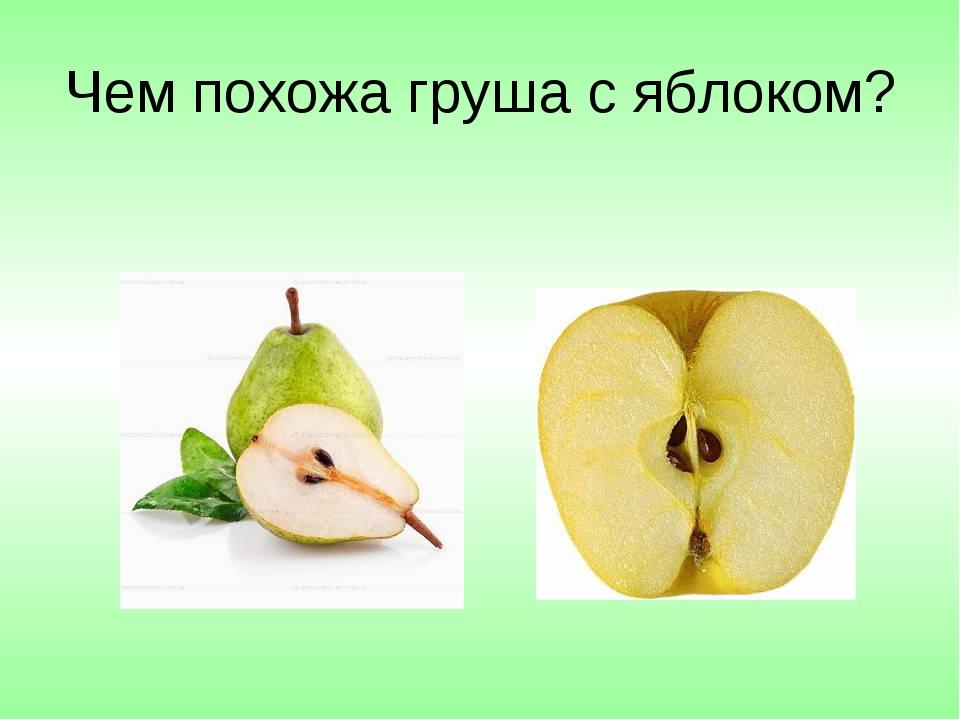 Чем похожа груша с яблоком?