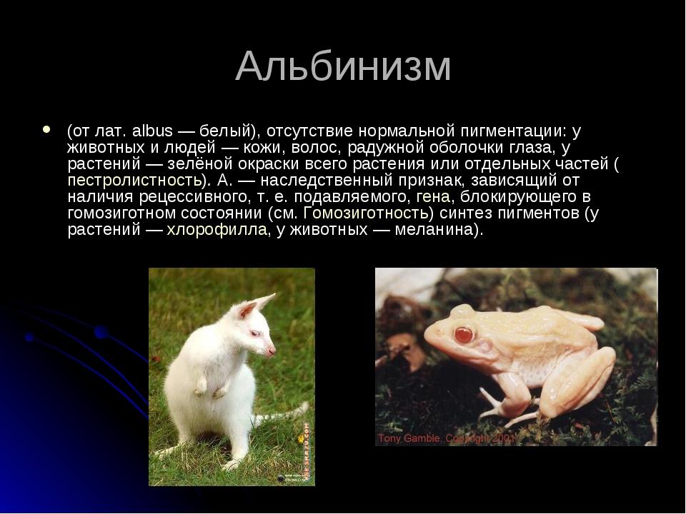 Альбинизм (от лат. albus — белый), отсутствие нормальной пигментации: у живот...
