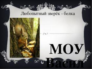 Любопытный зверёк - белка МОУ Васильевская СШ Учитель начальных классов Туров