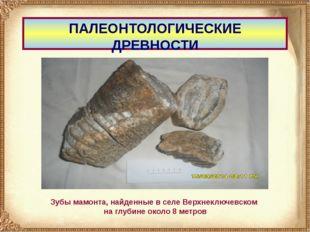 ПАЛЕОНТОЛОГИЧЕСКИЕ ДРЕВНОСТИ Зубы мамонта, найденные в селе Верхнеключевском