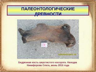 ПАЛЕОНТОЛОГИЧЕСКИЕ ДРЕВНОСТИ Бедренная кость шерстистого носорога. Находка Ни