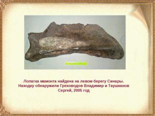 Лопатка мамонта найдена на левом берегу Синары. Находку обнаружили Греховодов