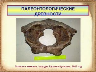 ПАЛЕОНТОЛОГИЧЕСКИЕ ДРЕВНОСТИ Позвонок мамонта. Находка Руслана Кукарина, 2007