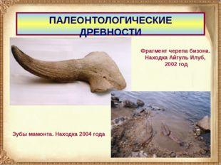 ПАЛЕОНТОЛОГИЧЕСКИЕ ДРЕВНОСТИ Фрагмент черепа бизона. Находка Айгуль Илуб, 200