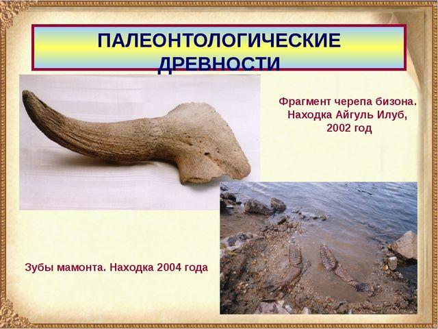 ПАЛЕОНТОЛОГИЧЕСКИЕ ДРЕВНОСТИ Фрагмент черепа бизона. Находка Айгуль Илуб, 200...