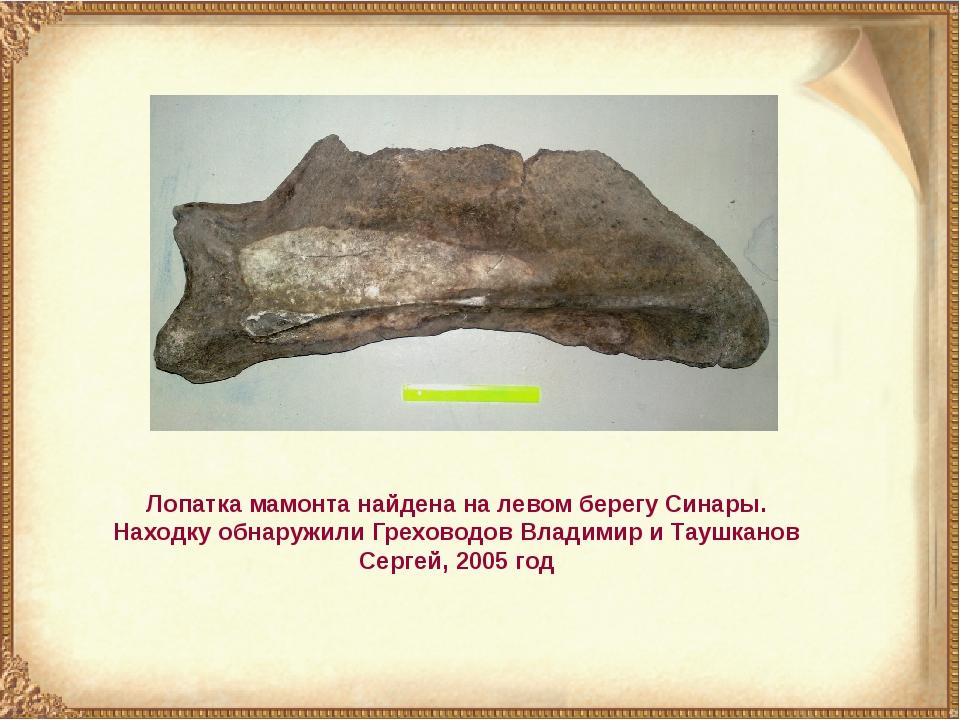 Лопатка мамонта найдена на левом берегу Синары. Находку обнаружили Греховодов...