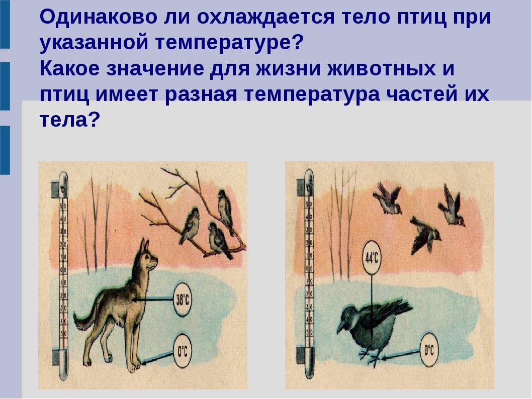 Одинаково ли охлаждается тело птиц при указанной температуре? Какое значение...