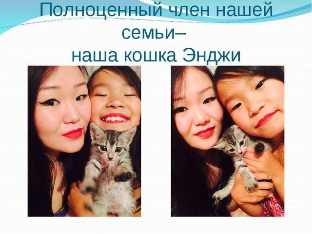 Полноценный член нашей семьи– наша кошка Энджи