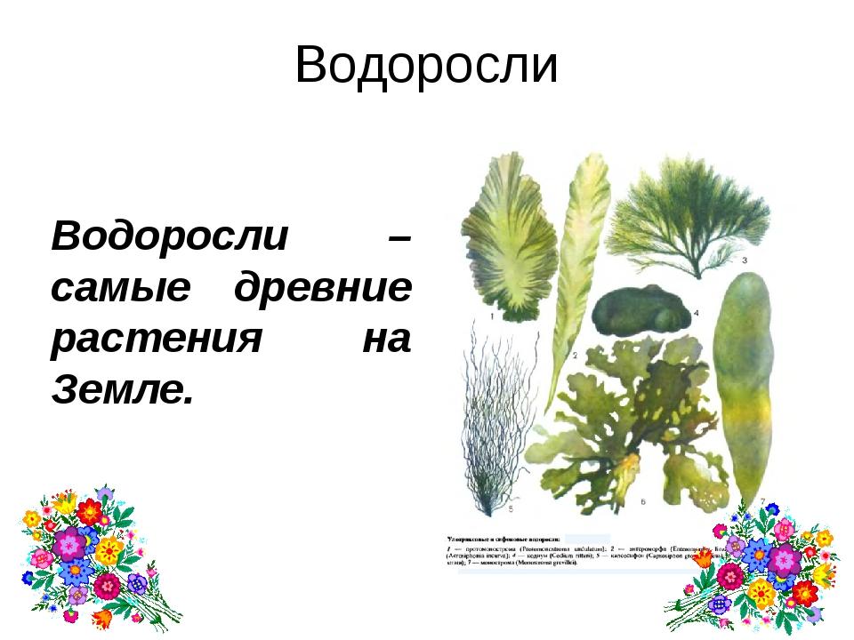 Домашнее задание. Параграф 36-37. Выучить термины. Найдите названия растений,...