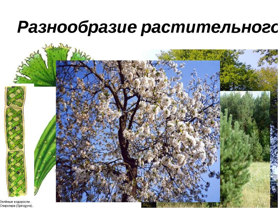 Разнообразие растительного мира на Земле.