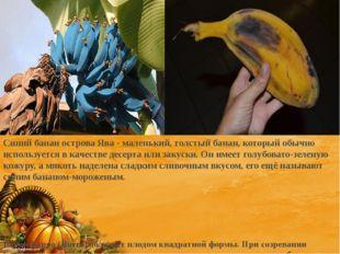 Синий банан острова Ява - маленький, толстый банан, который обычно используе