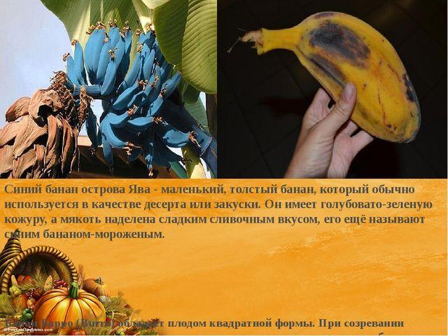 Синий банан острова Ява - маленький, толстый банан, который обычно используе...
