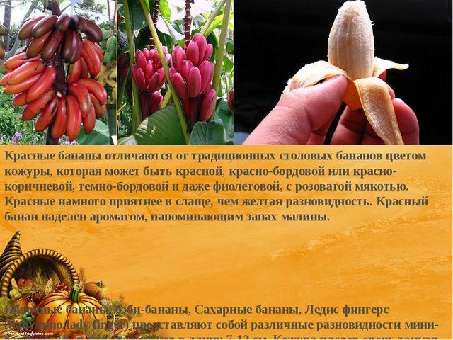 Красные бананы отличаются от традиционных столовых бананов цветом кожуры, ко...