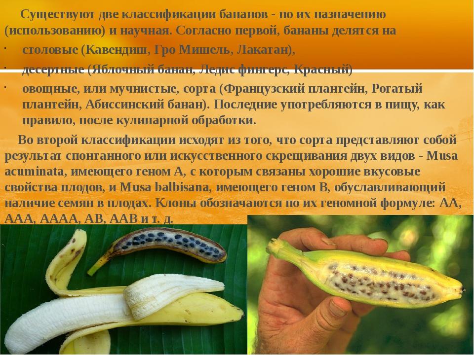 Существуют две классификации бананов - по их назначению (использованию) и на...