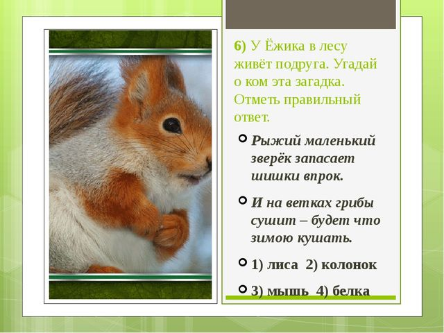 6) У Ёжика в лесу живёт подруга. Угадай о ком эта загадка. Отметь правильный...