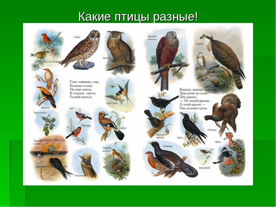Какие птицы разные!