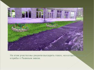 На этом участке мы решили высадить газон, на котором будут 2 клумбы с Львиным