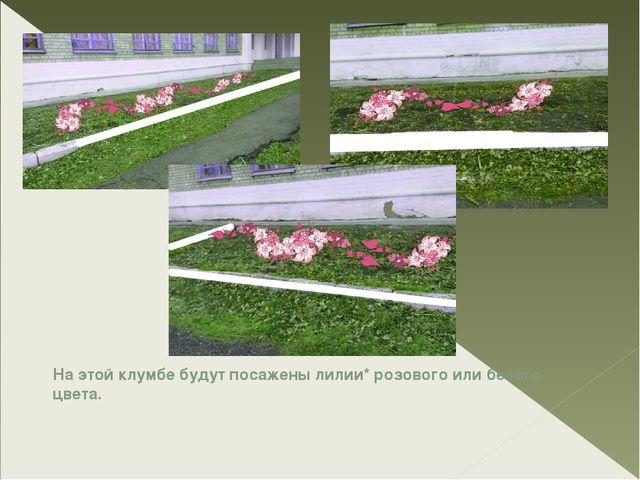 На этой клумбе будут посажены лилии* розового или белого цвета.