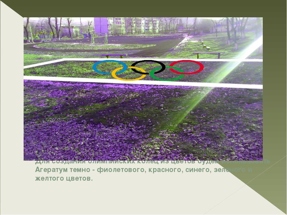 Для создания олимпийских колец из цветов будем использовать Агератум темно -...