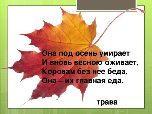 Она под осень умирает И вновь весною оживает, Коровам без нее беда, Она – их...