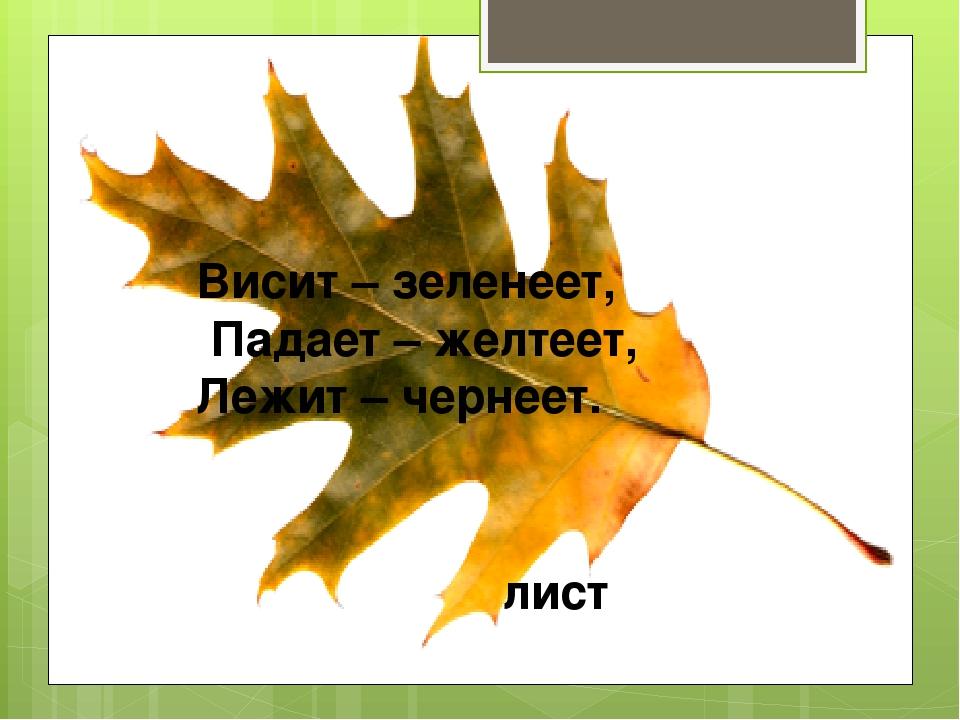 Висит – зеленеет, Падает – желтеет, Лежит – чернеет. лист