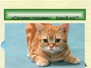 «Своими глазами»: Какой кот?