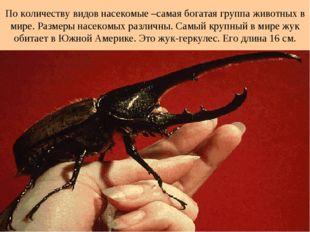 По количеству видов насекомые –самая богатая группа животных в мире. Размеры
