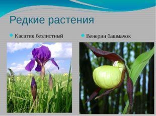 Редкие растения Касатик безлистный Венерин башмачок
