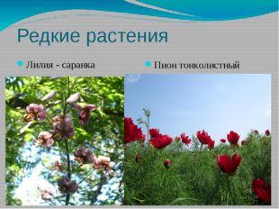 Редкие растения Лилия - саранка Пион тонколистный