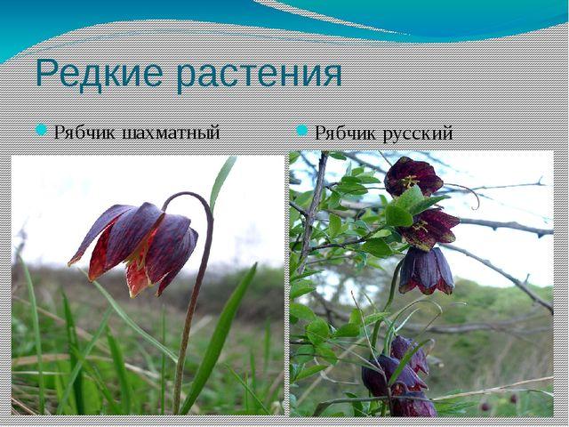 Редкие растения Рябчик шахматный Рябчик русский