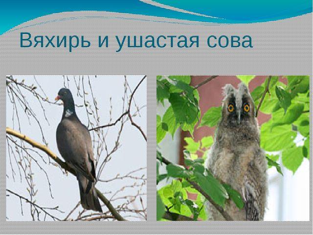 Вяхирь и ушастая сова
