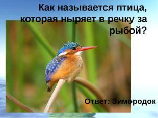 Как называется птица, которая ныряет в речку за рыбой? Ответ: Зимородок