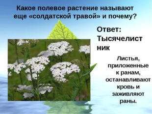 Какое полевое растение называют еще «солдатской травой» и почему? Ответ: Тыся