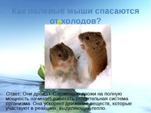 Как полевые мыши спасаются от холодов? Ответ: Они дрожат. С помощью дрожи на