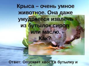 Крыса – очень умное животное. Она даже умудряется извлечь из бутылок сироп ил