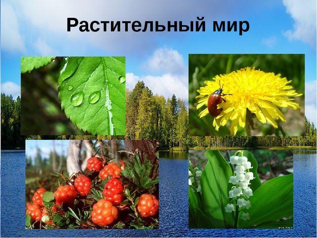 Растительный мир