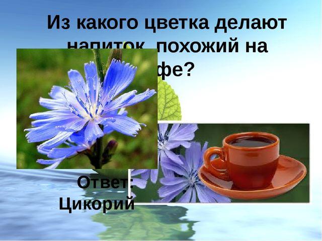 Из какого цветка делают напиток, похожий на кофе? Ответ: Цикорий