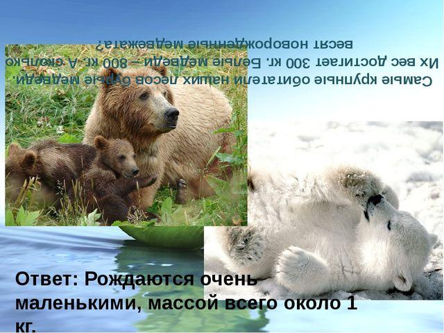 Самые крупные обитатели наших лесов бурые медведи. Их вес достигает 300 кг. Б...