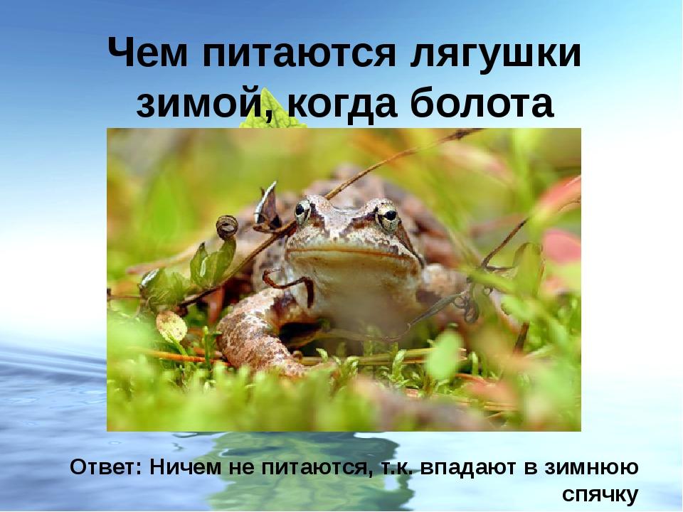 Чем питаются лягушки зимой, когда болота замерзают? Ответ: Ничем не питаются,...