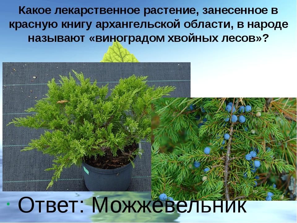 Какое лекарственное растение, занесенное в красную книгу архангельской област...