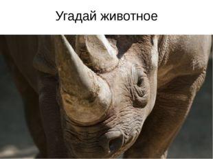 Угадай животное