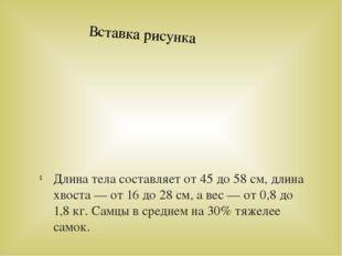 Длина тела составляет от 45 до 58 см, длина хвоста — от 16 до 28 см, а вес —